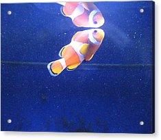 Nemo Acrylic Print by Davor Sintic