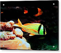 Neon Fish Acrylic Print by Val Oconnor