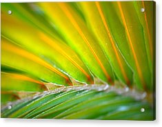 Neon Palm Acrylic Print by Kimberly Gonzales