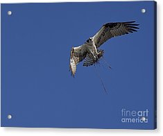 Acrylic Print featuring the photograph Nest Builder by Anne Rodkin