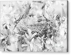 Nest In Black And White Acrylic Print by Stephanie Frey