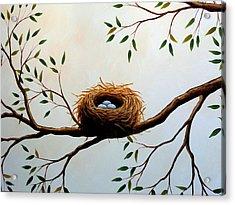Nesting Acrylic Print by Amy Giacomelli