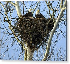 Acrylic Print featuring the photograph Nesting by Brian Stevens
