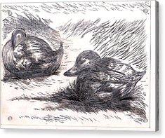 Nesting Mallards Acrylic Print by Al Goldfarb