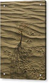Nevada Dunes Acrylic Print