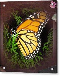 New Born Butterfly Acrylic Print by Debra     Vatalaro