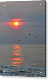 New Day Acrylic Print by Tazz Anderson