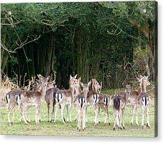 New Forest Deer Acrylic Print by Karen Grist