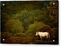 Acrylic Print featuring the photograph New Forest Walk by Dorota Kudyba