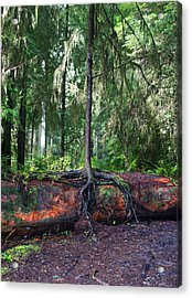 New Growth Acrylic Print by Anthony Jones