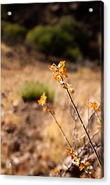 New Growth Acrylic Print