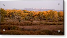 New Mexican Fall Acrylic Print by Denice Breaux
