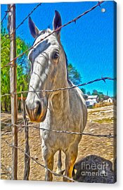 New Mexico Horse Acrylic Print by Gregory Dyer