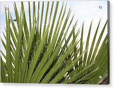 New Mexico Plant Acrylic Print by Snow  White