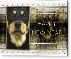 New Year - Golden Elegance Australian Kelpie Acrylic Print by Renae Laughner