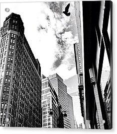 New York City - In Flight Acrylic Print by Vivienne Gucwa