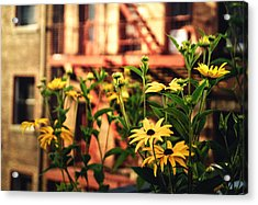 New York City Flowers Along The High Line Park Acrylic Print by Vivienne Gucwa