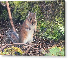Newport Squirrel Acrylic Print