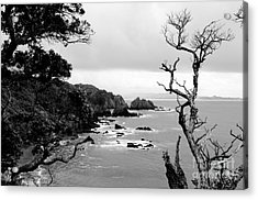 Ngunguru Bay New Zealand Acrylic Print