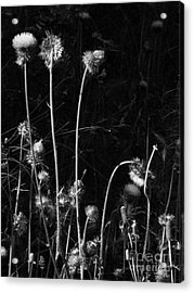 Night Dance Acrylic Print by Joe Jake Pratt