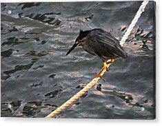Night Fishing Acrylic Print