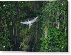 Night Flight Acrylic Print by Lynda Dawson-Youngclaus