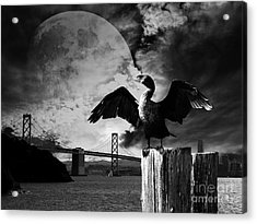 Night Of The Cormorant . Black And White Acrylic Print