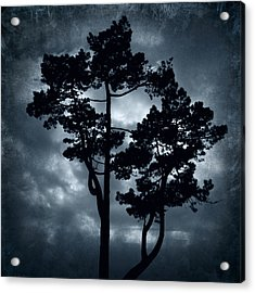 Night Tree Acrylic Print by Svetlana Sewell
