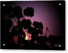 Acrylic Print featuring the photograph Nightwish by Itzhak Richter