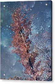 Nighty Tree Acrylic Print by Aimelle