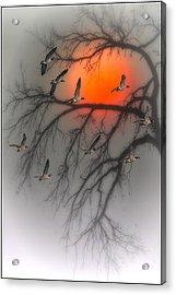 Nine Tonight Acrylic Print by Tom York Images