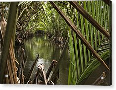 Nipa Palms Line A Channel Acrylic Print by Tim Laman
