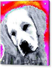 Nixo.02.01.2012.4 Acrylic Print