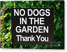 No Dogs In The Garden Thank You Acrylic Print by Andee Design