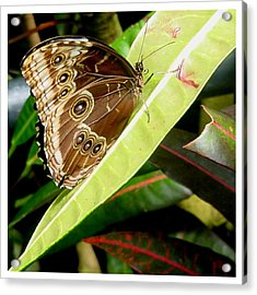 Acrylic Print featuring the photograph No Nectar Here by Frank Wickham