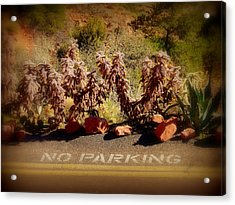 No Parking Acrylic Print by Cindy Wright
