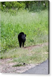 No Picture Today Said The Boar Acrylic Print by Elizabeth  Doran