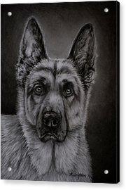Noble - German Shepherd Dog  Acrylic Print