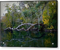 North Florida River Reflections Acrylic Print by Carla Parris