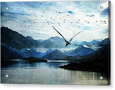 North For The Winter Acrylic Print