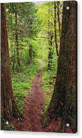 Acrylic Print featuring the photograph North Umpqua Trail by Tyra  OBryant