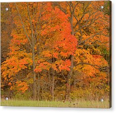 Northeast Fall Colors Acrylic Print by Stephen  Vecchiotti