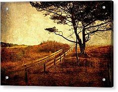 Norwegian Pine Acrylic Print