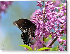 Nothing Says Spring Like Butterflies And Lilacs Acrylic Print by Lori Tambakis