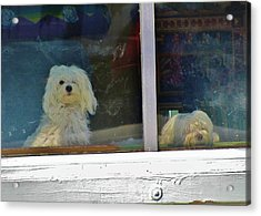 Now And Later Acrylic Print by Christine  Fifer