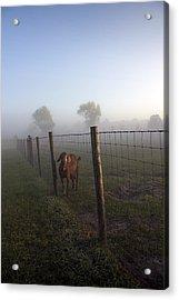 Acrylic Print featuring the photograph Nubian Goat by Lynn Palmer