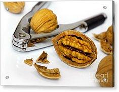 Nut Cracker Acrylic Print