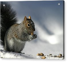 Nutty About Winter Acrylic Print