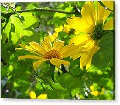 Oahu Sunshine Acrylic Print