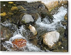 Oak Creek Acrylic Print by Lauri Novak